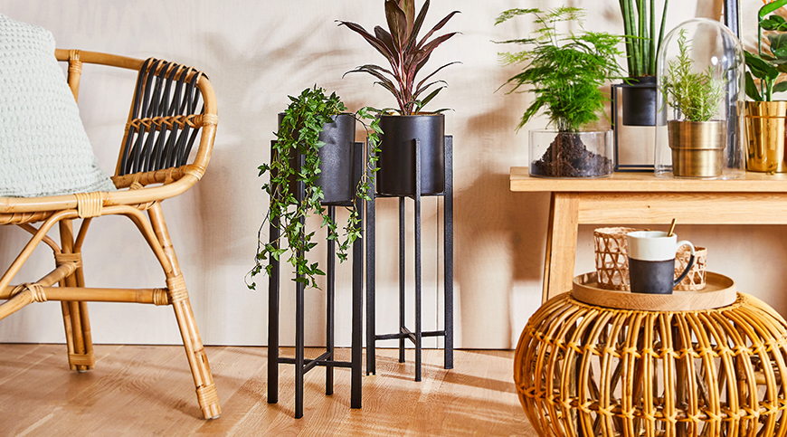 Mestská džungľa – domov v objatí rastlín